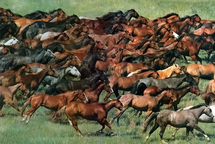 Почему лошадь не приносят в жертву — Курбан?