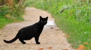 Что означает чёрный кот перебегающий вам дорогу?