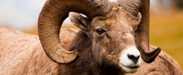 Можно ли кастрировать животных?